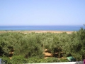 Overlooking the airstrip across olive trees from the entrance courtyard of the cemetery